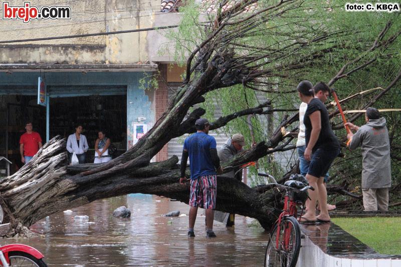 Muita chuva deixa centro de Guarabira alagado e árvores caem. Veja fotos