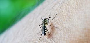 Cientistas dos Estados Unidos e do Brasil se unem para combater avanço do Zika