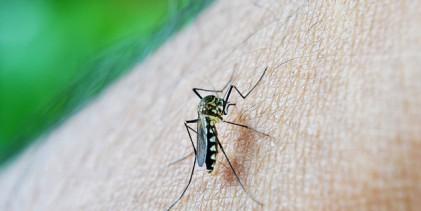 Dados da dengue e chikungunya devem ser enviados até sexta