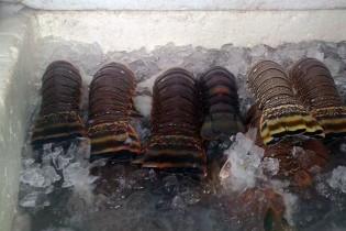 Carga irregular com 400 kg de lagosta é apreendida na Paraíba