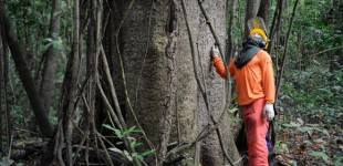 Brasil ocupa 18ª posição entre economias verdes entre 60 países avaliados