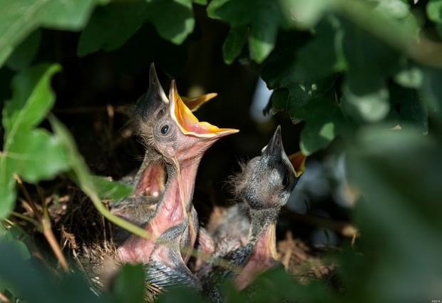 Batalhão de Polícia Ambiental captura mais de 1,3 mil aves silvestres