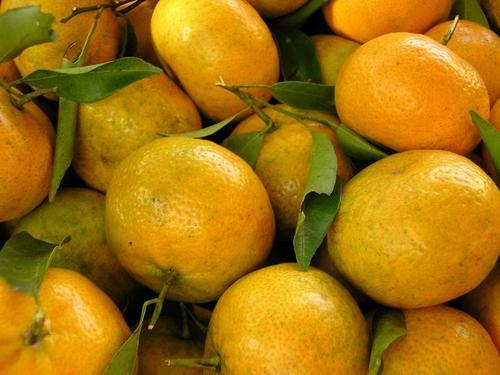 Produtores de laranja comemoram safra anual no Brejo paraibano