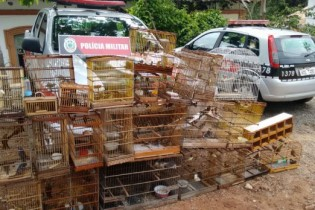 Polícia apreende 140 animais silvestres em operação na feira de Oitizeiro