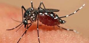Fiocruz detecta vírus zika com potencial de infecção em saliva e urina