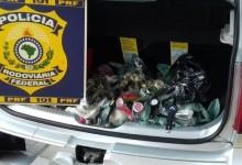 PRF apreende mil relógios sem nota fiscal dentro de mala de carro na PB