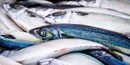 Toneladas de peixes mortos aparecem nas praias do Chile