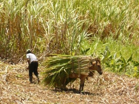 Comunidade quilombola Engenho Mundo Novo, em Areia - Créd Rodrigo Domenech de Souza (10)